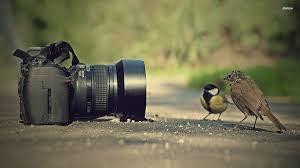 fotosesiju fotografavimas