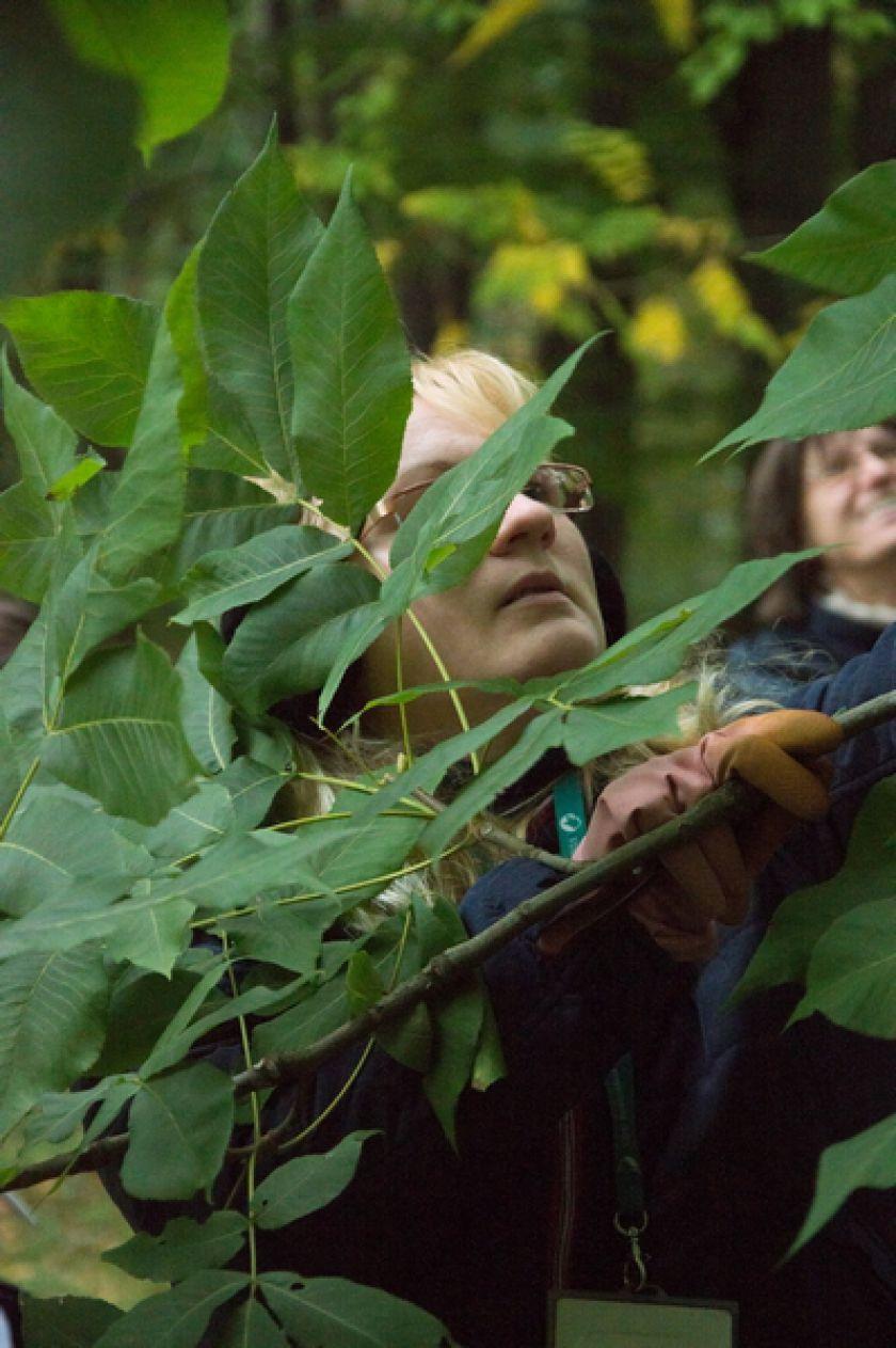 Riešutmedžių giraitėje kvietė pažinti neatrastą skonį