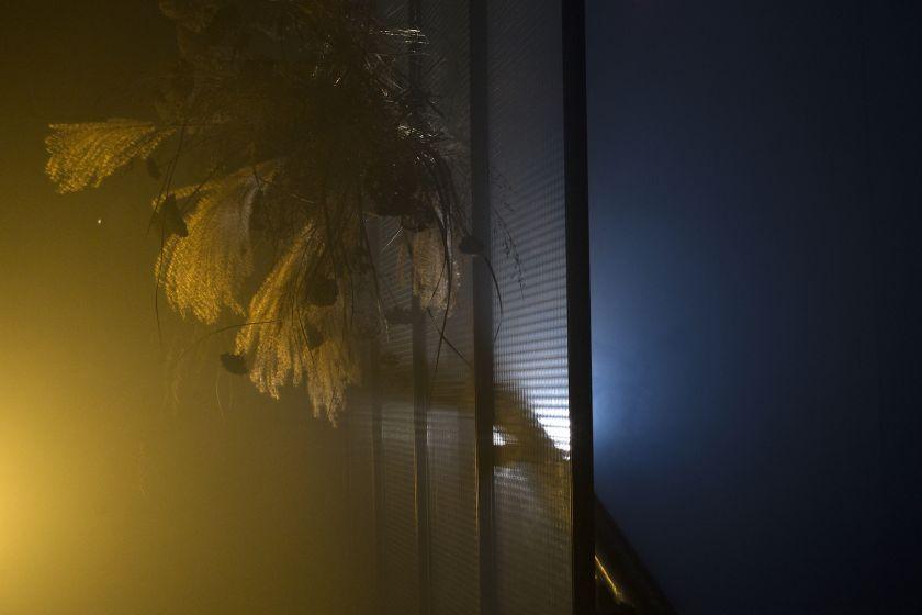 Slaptoje Vilniaus vietoje suvešėjo išskirtinių augalų miškas