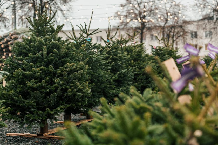 Pirmą kartą Lietuvoje pristatomas net 1000 kalėdinių eglių centras
